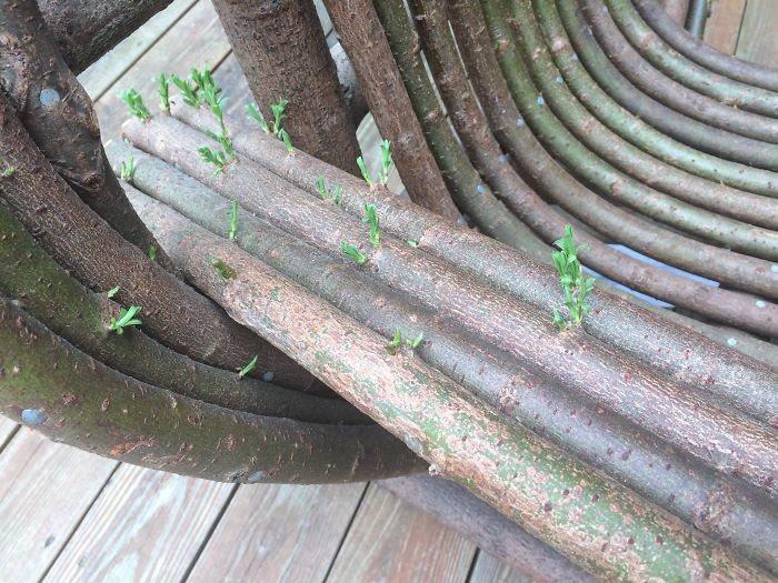 Кресло ожило дерево, живучесть, жизнь, мир, планета, растительность, фото