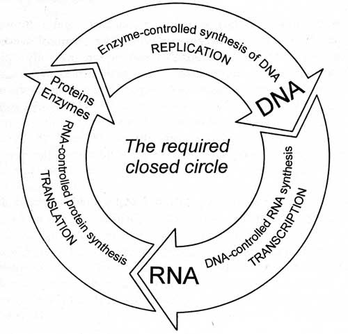Gitt: Le cercle de la vie: protéines, ADN, ARN