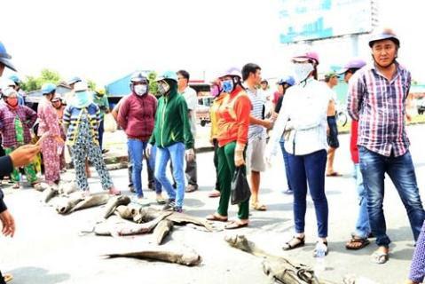 Người dân mang xác cá chết đổ ra quốc lộ, đường đi Vũng Tàu tắc nghẽn - ảnh 12