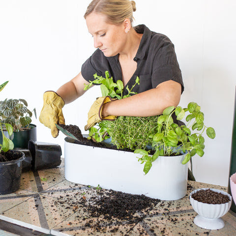 Step 5: How To Create Your Own Herb garden
