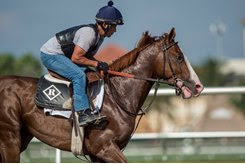 Free Drop Billy gallops March 2 at Gulfstream Park
