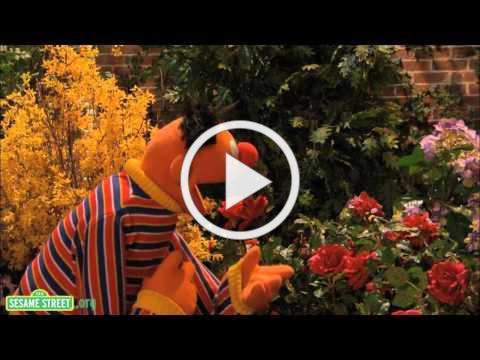 Sesame Street: I Wonder