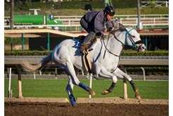 Little Red Feather Racing's Scrambled training at Santa Anita Park
