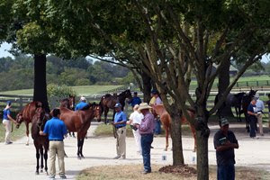 Inspecting stock at the Keeneland September Sale