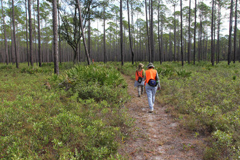 Hikers on Purify Bay section of FNST by Doug Alderson