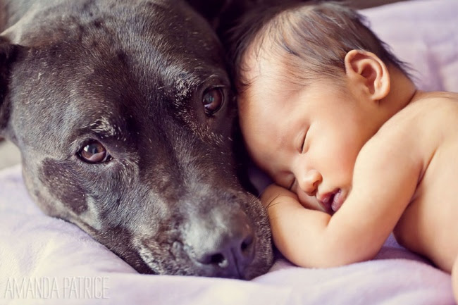 http://s.fishki.net/upload/post/201412/02/1339454/10383460-r3l8t8d-650-small-babies-children-big-dogs-1__880.jpg