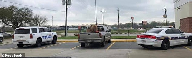 Horse spotted standing up in back of pickup truck as owner drove 55mph down highway