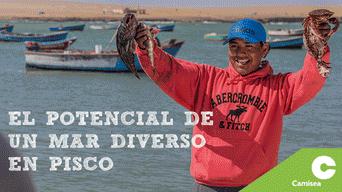 En Pisco existen 4 infraestructuras pesqueras: San Andrés, Laguna Grande, Lagunillas y El Chaco.