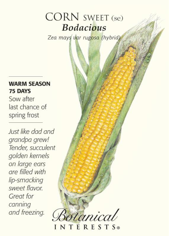Corn Bodasious