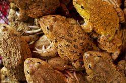 Sobre ranas, monogamias y racismo