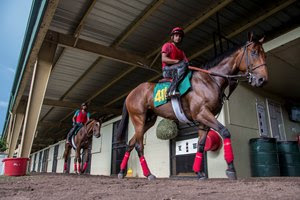 Ocala Breeders' Sales will conduct its June 2-year-olds in training sale.