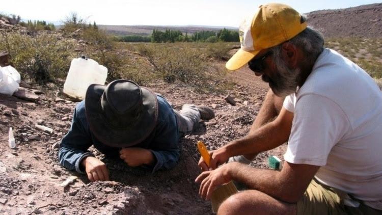 Los paleontólogos realizaron tareas durante 15 días para poder extraer los restos del ejemplar.