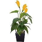 Artificial Plants <br>Flat 50% off