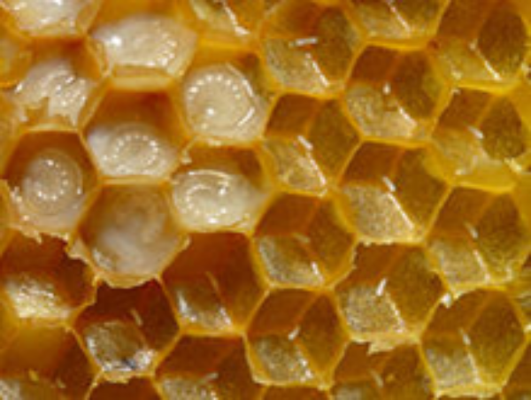 eggs and honey bee larvae in royal jelly
