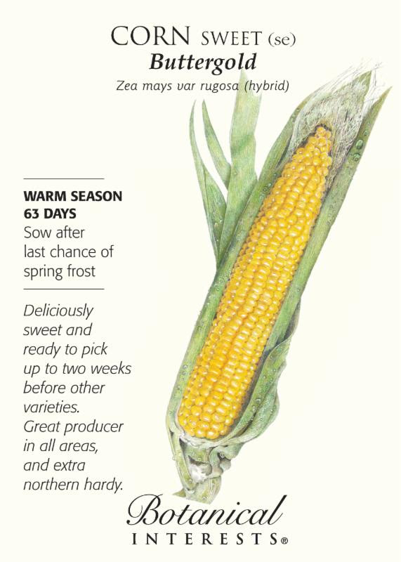 Corn Buttergold