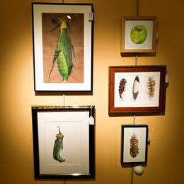 Five framed watercolors: a corn in its husk; a chilli pepper; a green apple; three earth-colored feathers; a single earth colored feather.