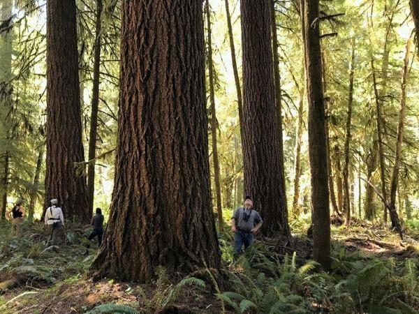 Un bosque experimental. Foto Matthew Betts