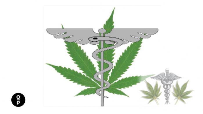 VIDEO. Cannabis : les propriétés thérapeutiques de la plante