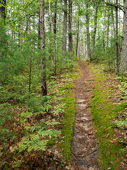 A peaceful trail from the Sands Lake Quiet Area is shown from Grand Traverse County.