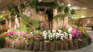 Santa Barbara's still mad about the blooms as orchid show turns 70