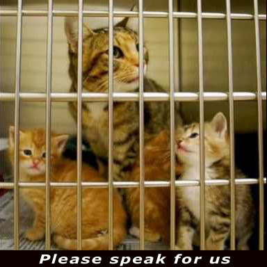 voiceless cat and kittens