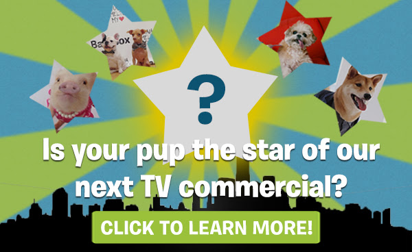 Enter for a chance to star in BarkBox's TV commercial!