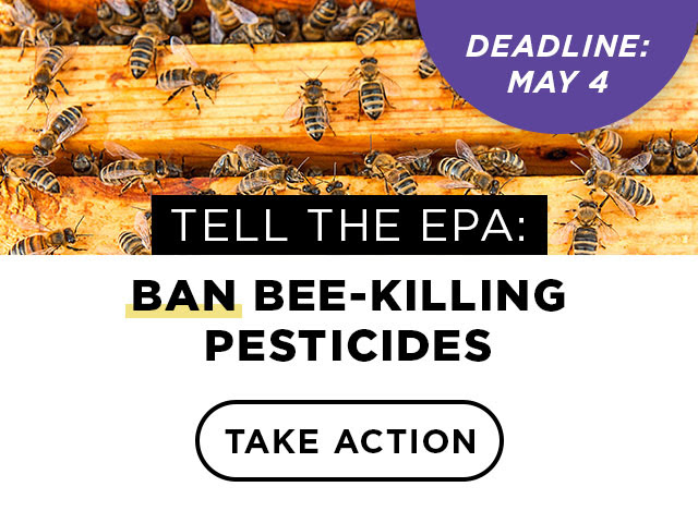 Ban bee-killing pesticides