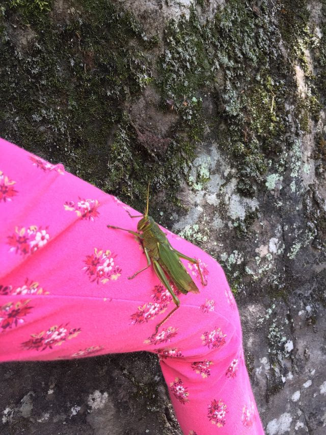 A giant green grasshopper perched on a kid's pink floral leggings