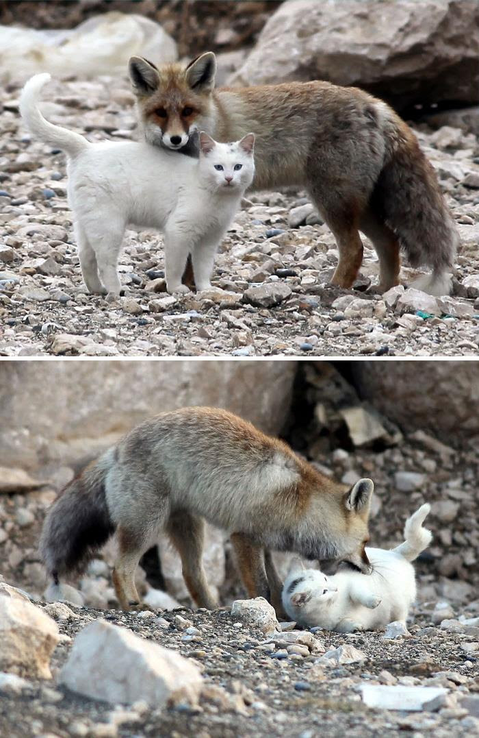 Cat And Fox Are Best Friends
