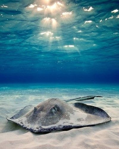 I hope to come back as a Manta Ray in my next life:-)