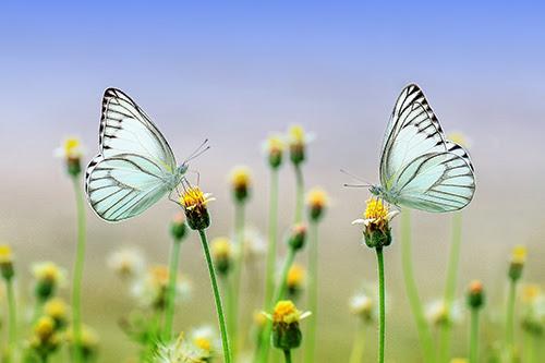 Schmetterlings Effekt