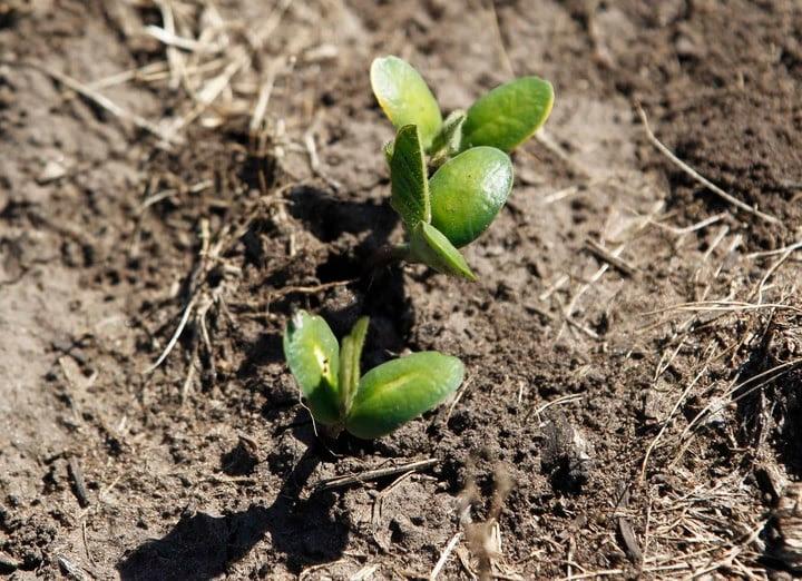 La fotosíntesis utiliza la enzima Rubisco, la proteína más abundante del planeta, y la energía solar para convertir el dióxido de carbono y el agua en azúcares que estimulan el crecimiento y el rendimiento de las plantas.  Foto: REUTERS/Enrique Marcarian