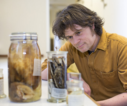 Looking at specimen jars