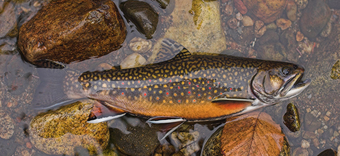 Vermont Research News: Women at work, brook trout, comic book art and more…