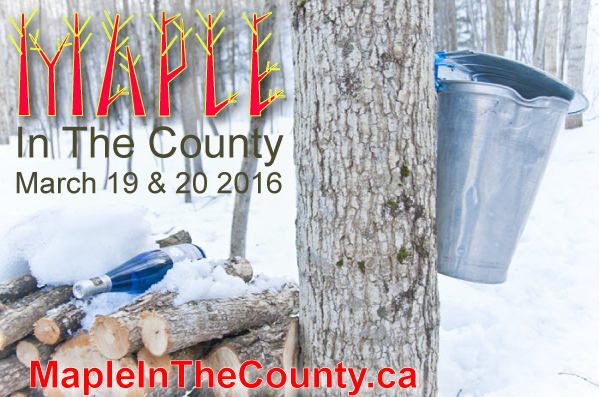 Maple in the County