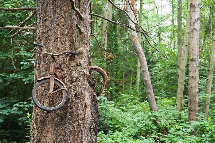 Велосипед на дереве дерево, живучесть, жизнь, мир, планета, растительность, фото
