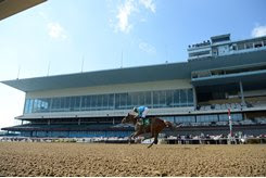 A horse races in front of empty stands at Aqueduct Racetrack