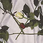 ALT 022CLR-LP