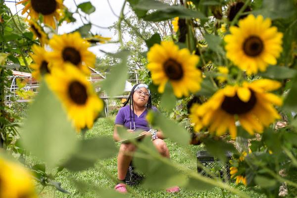 feedom-freedom-sunflowers
