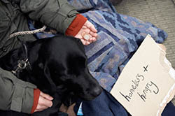 picture of homeless person and a dog