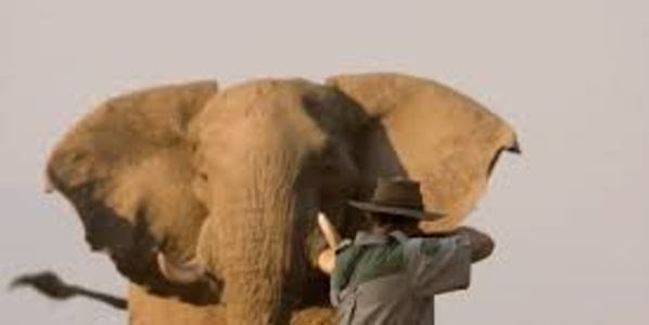 Stop Trophy Hunting In South Africa