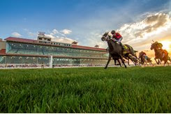 Horses race on the turf at Fair Grounds Race Course & Slots