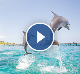 Watch a video about shore excursions!
