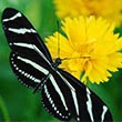 A butterfly on a flower at Washington Oaks Gardens