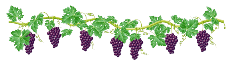 Grape vine border