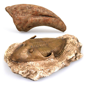 DINOSAUR & CRYPTID REPLICAS