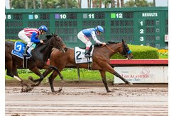Bast wins the 2019 Starlet Stakes at Los Alamitos Race Course