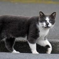 Prolifération des chats : stérilisation oui, euthanasie non !