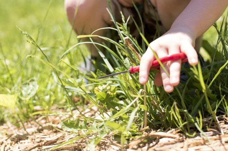 cutting nature to build fine motor skills