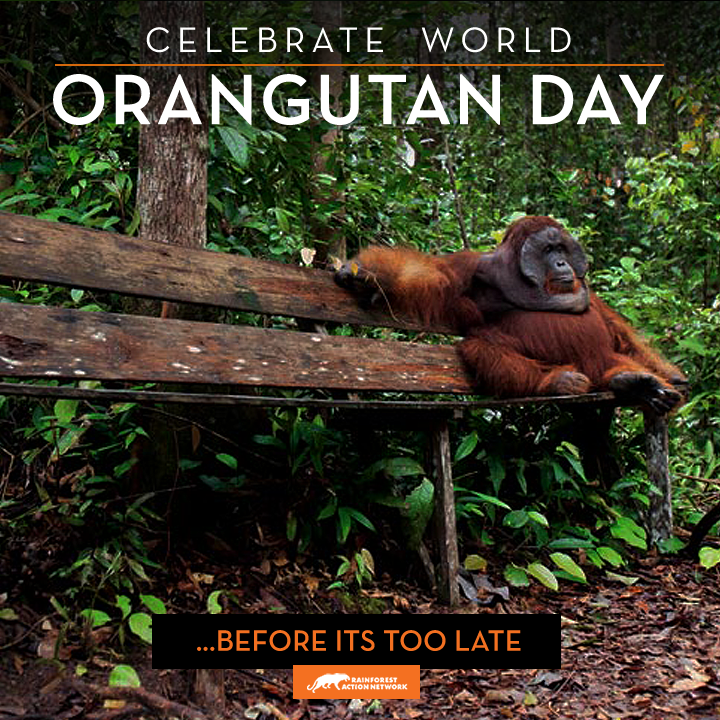WorldOrangutanDay_v1.png